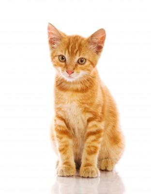cute-red-cat1